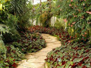 Dicas básicas de paisagismo para projetar seu próprio jardim (Foto de icon0.com no Pexels)